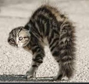 PATScat